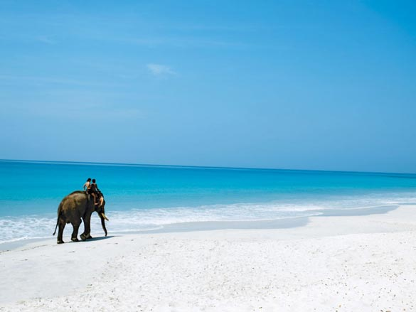 Elephant-Havelock-Island